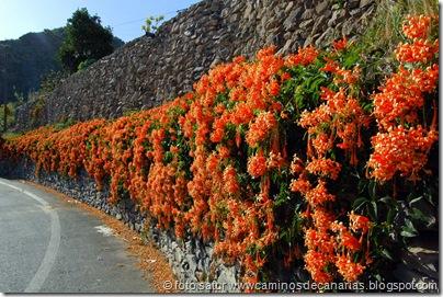 2091 Valsequillo-Valle San Roque(Trompetero naranja)