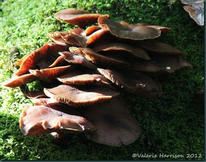 35-fungi