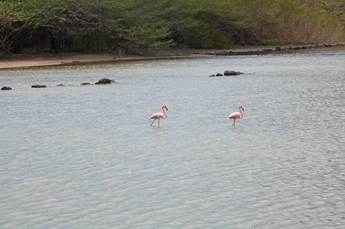 20131012flamingos (2) (Large)