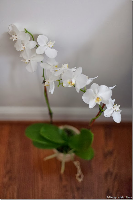 orchids are so beautiful
