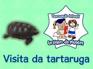 Visita da tartaruga na escola