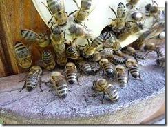 Včelí hoblování