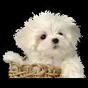 Cute Puppy Live Wallpaper icon