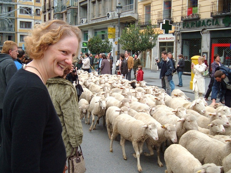 sheep-protest-1