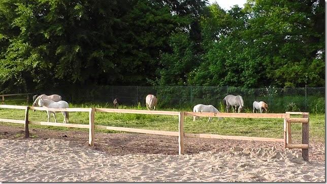 Die Lustige Ponyschule Der Umzug Ist Geschafft