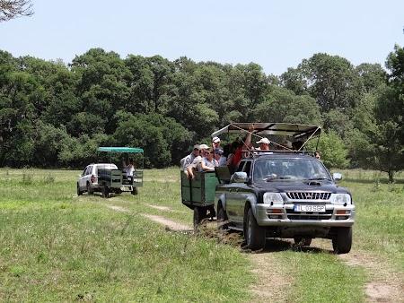 12. Safari in Letea.JPG