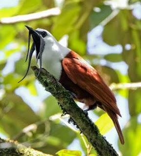 jenis burung unik di dunia
