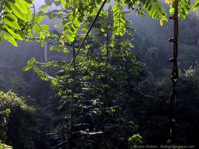 Tree top flight of the gibbon zip line