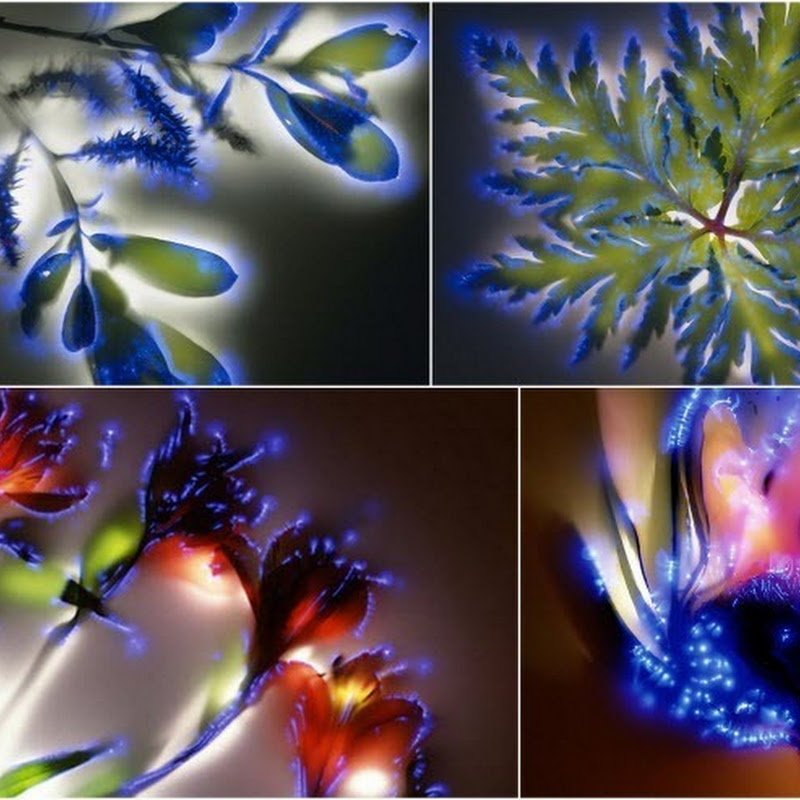 Robert Buelteman's Electrifying Images of Electrocuted Flowers