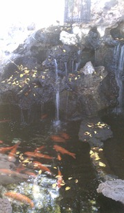 viceroy pond