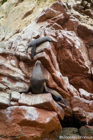 Peru-Paracas-Huacachina-que-ver-hacer-reserva-natural-dunas-unaideaunviaje.com-00008.jpg