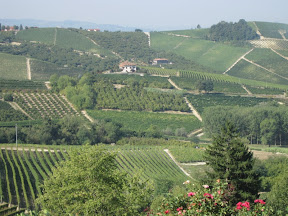The hills and wines of Piemonte