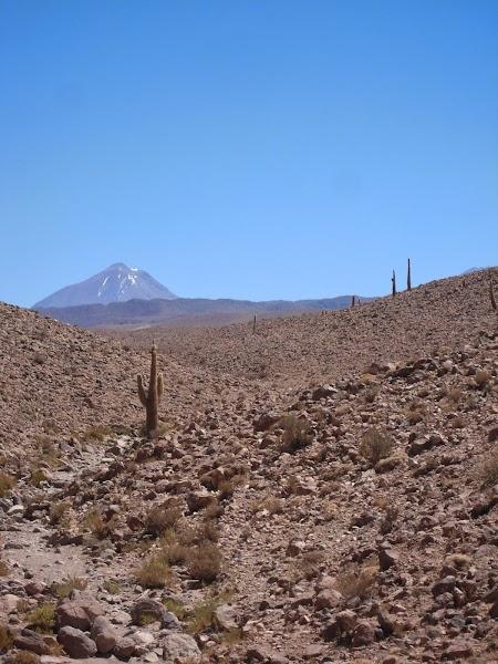 Excursie Atacama, Chile