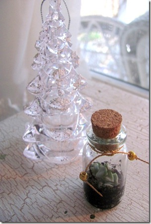 Tiny Succulent in a Bottle3