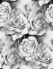 roses-drawing