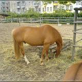 Jugendfarm Moritzhof - Pferde