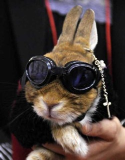 rabbit-fashion-show-2010