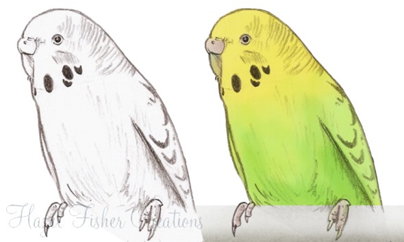 2013Apr05 budgies sketches
