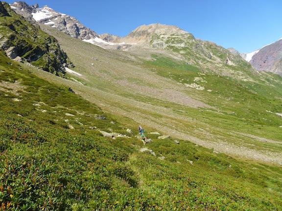 Biotope de Parnassius nordmanni. Cheget, 2800 m (Terskol, Kabardino-Balkarie), 8 août 2014. Photo : J. Marquet
