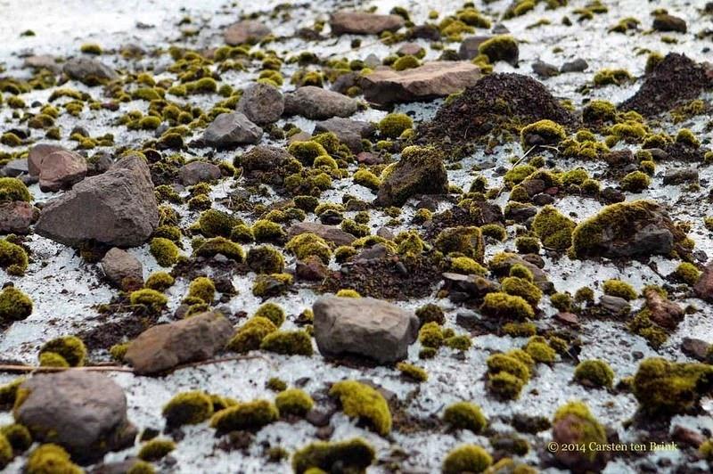 Glacier Mice: A Rolling Stone Does Gather Moss  Glacier-mice-6%25255B6%25255D