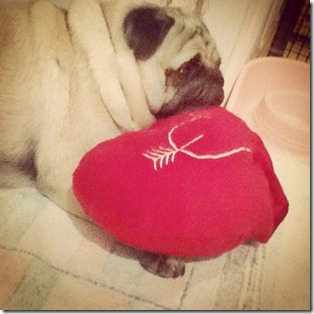 luna-dog-pug-heart-pillow-red-valentines