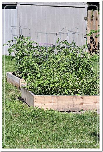 garden62011