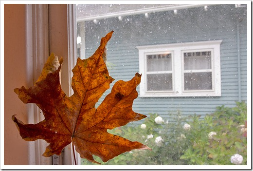 111104_maple_leaf_through_window
