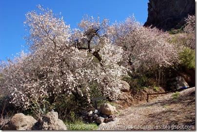 7437 La Goleta-La Candelilla(Almendro en flor)