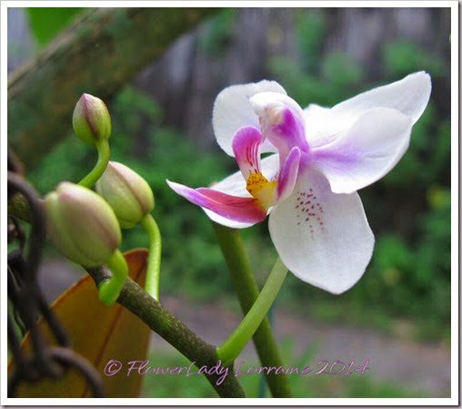 06-30-unkn-orchid