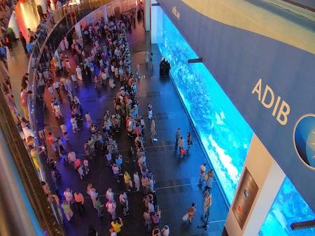 Acvariu Dubai Mall