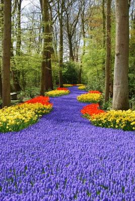 Keukenhof Gardens - We will bring Keukenhof to you! Keukenhof