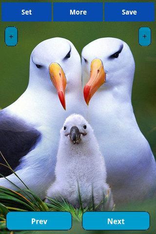 【免費娛樂App】Birds wallpapers-APP點子