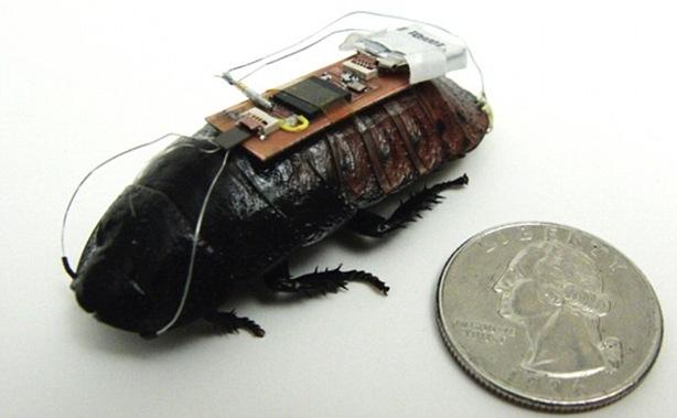 cucaracha-robot