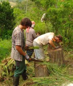 Producción-Vetiver-Parque-Bambú-Ecuador