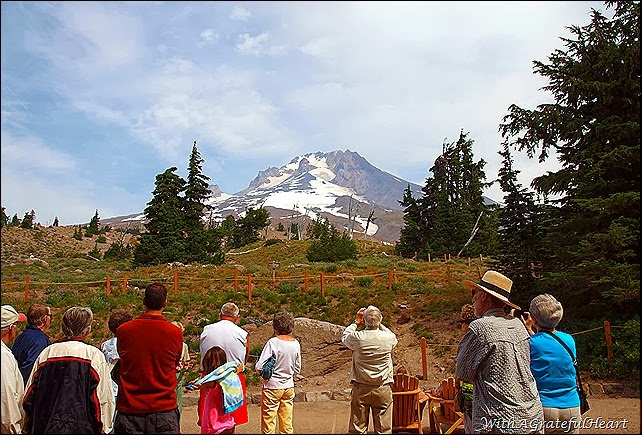 Timberline Tour