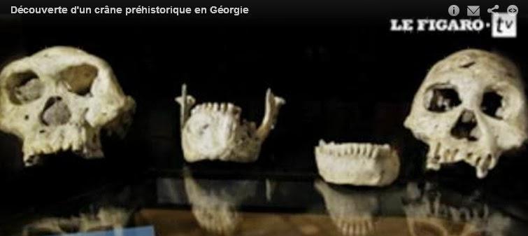 Un crâne de 1,8 million d'années révolutionne l'histoire de l'évolution  dans Culture d%C3%A9couverte+cr%C3%A2ne+g%C3%A9orgie