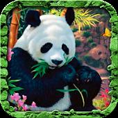 Panda Bear Live Wallpaper