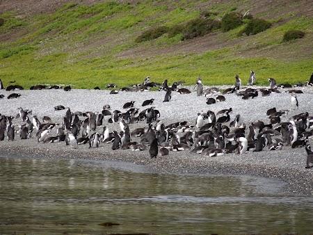 Tara de Foc: Insula pinguinilor
