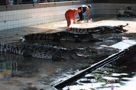 Obiective turistice Thailanda: crocodili Bangkok