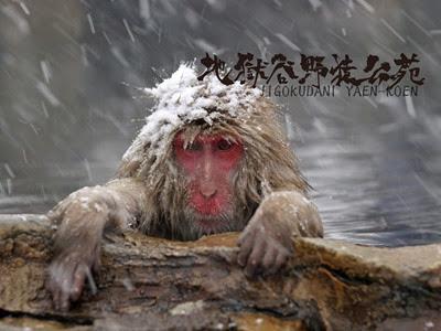 snowmonkey1024x768