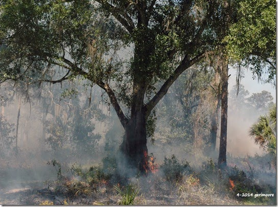 Myakka River SP fire 007