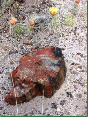 Painted Desert & Petrified Forest 397A