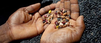 Hands-Holding-Seeds1-1200x520