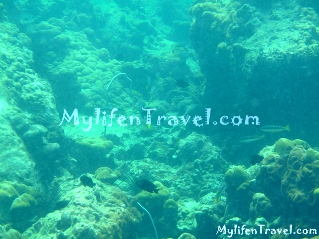Koh Lipe Diving 19