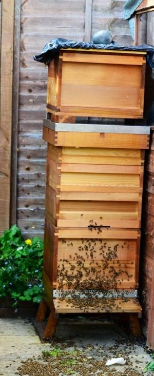 Bee - two brood boxes plus supers