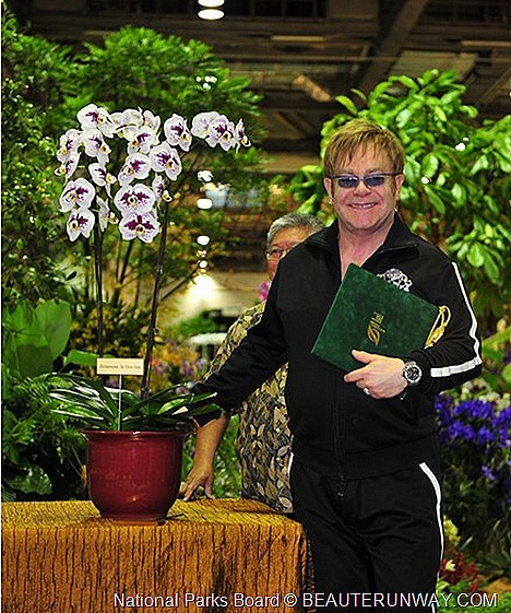 Elton John Doritaenopsis Marina Bay Sands  ORCHID  20th WORLD ORCHID CONFERENCE SINGAPORE