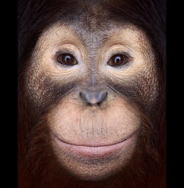 animal-photography-affinity-Brad-Wilson-orangutan-1.jpeg