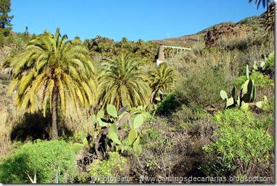 7315 Tunte-Fataga-Arteara(Barranco de Fataga)