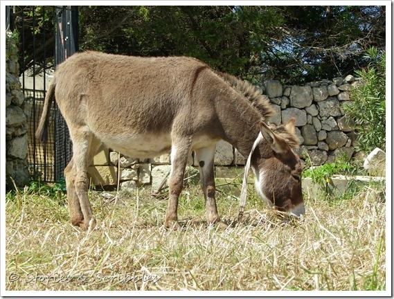 Donkeys (3)