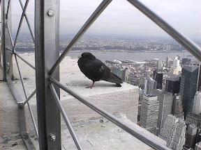 140 - Paloma Downtown en el Empire State Building.jpg